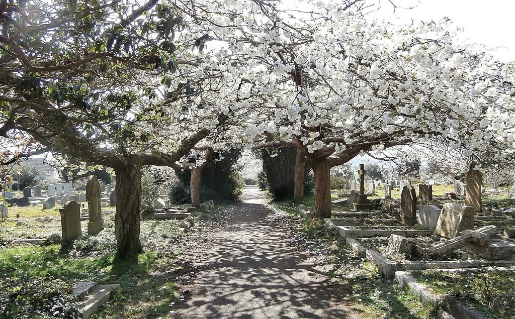 Watering Hill Lane Cemetery. by cutekitty