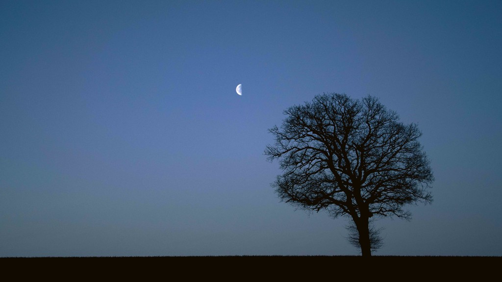 Half Light  by moonbi