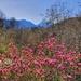 Magical Mountain Magnolias