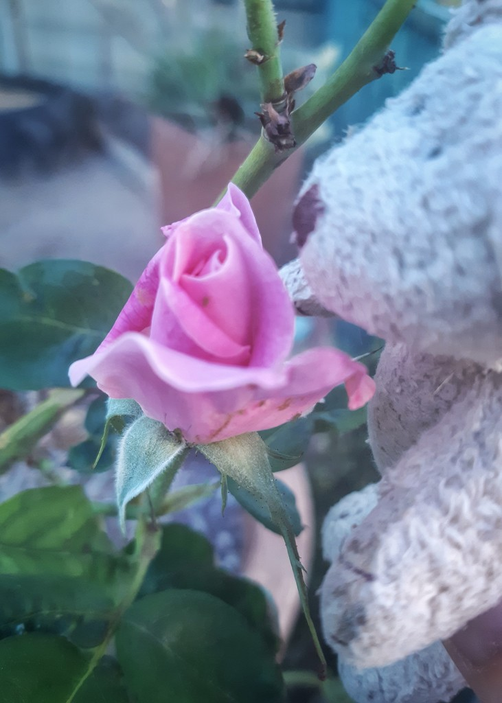 Take time to smell the roses  by salza