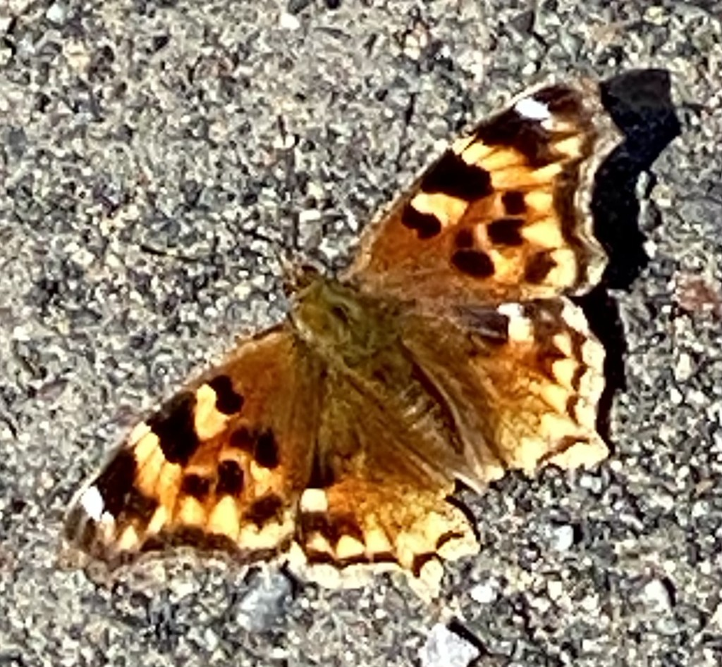 Lots of Moths out Today! by radiogirl