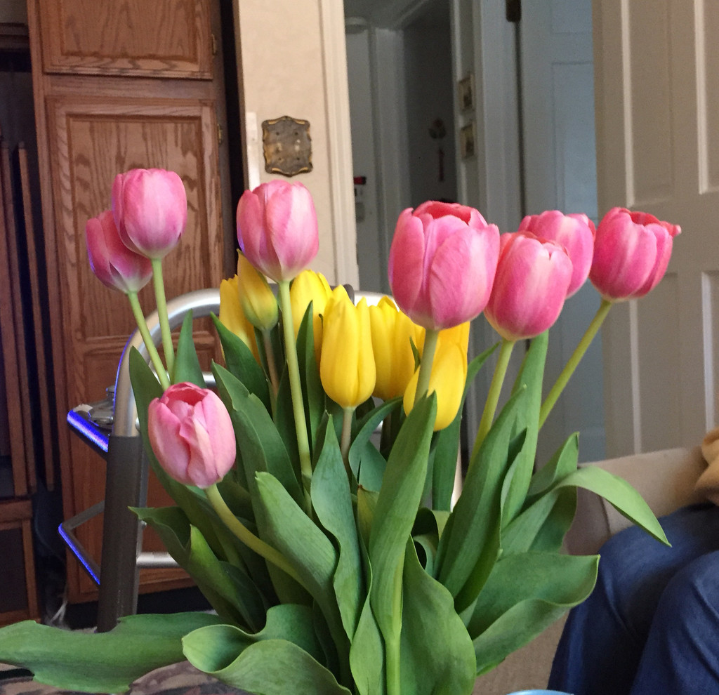 Easter tulips by kchuk