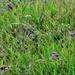 Finches, Rain & Grass Seeds ~
