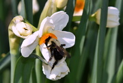 5th Apr 2021 - Relationship of Bee and Flower