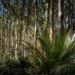 T. rex forest
