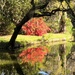 Live oak and azalea reflections