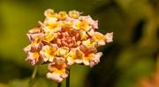 4th Apr 2021 - Flower!