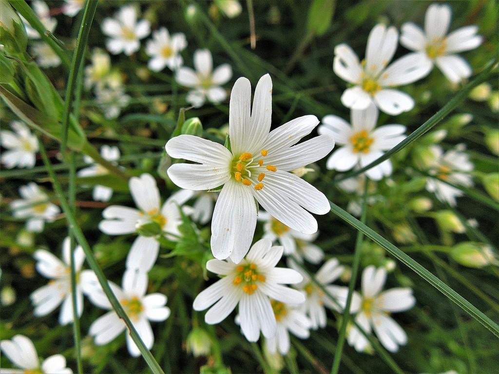Footpath flowers by etienne