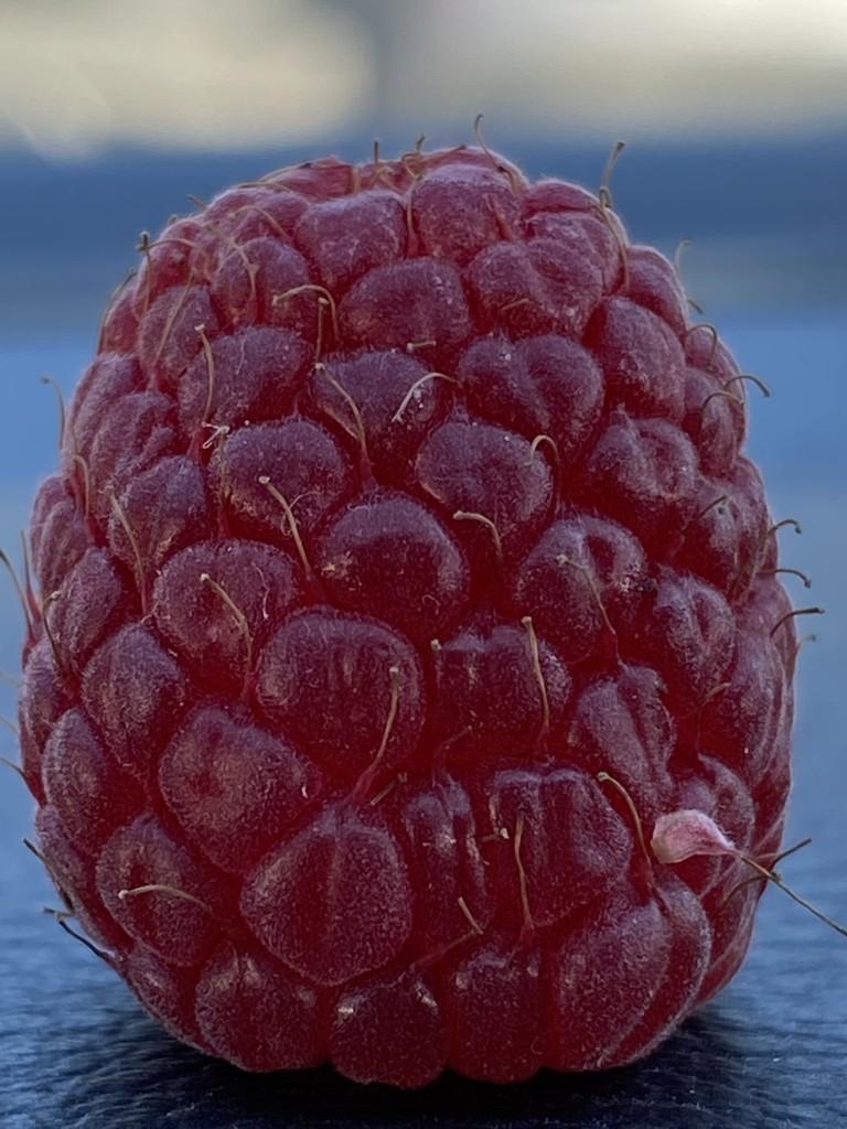 Raspberry by clay88