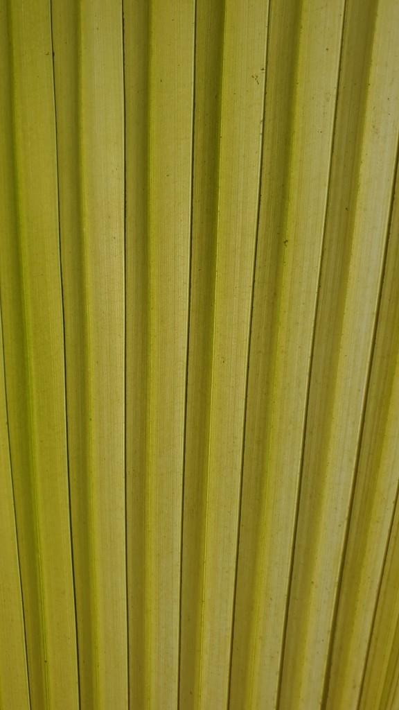Leaf abstract by julianneovie