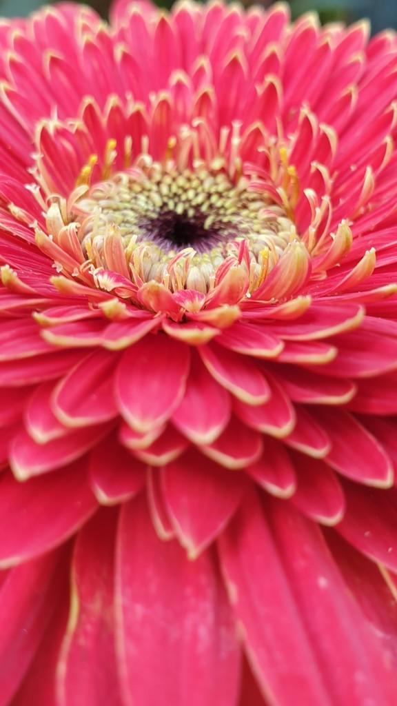 Bloom prettily  by julianneovie