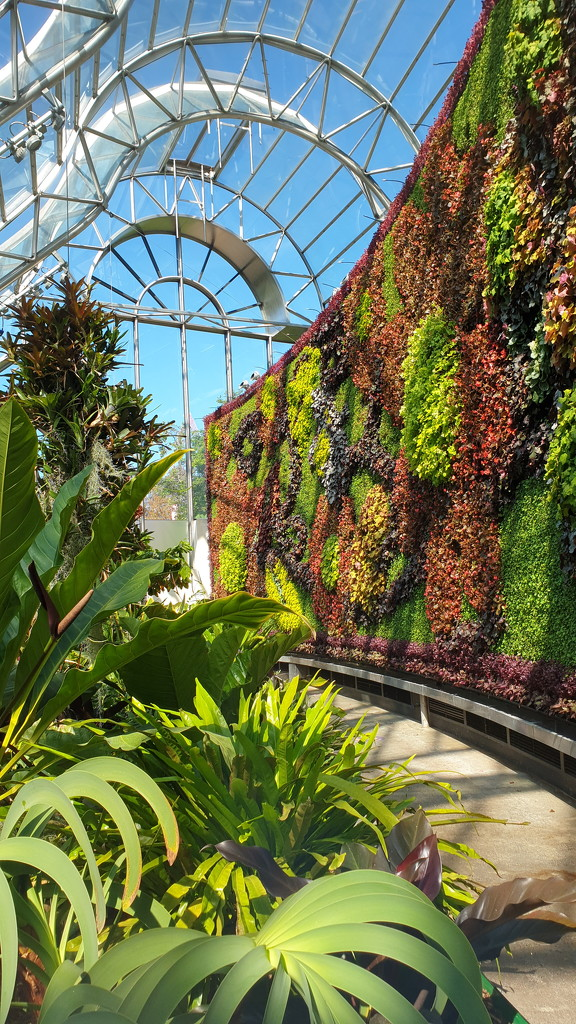 Plants at the Calyx by julianneovie
