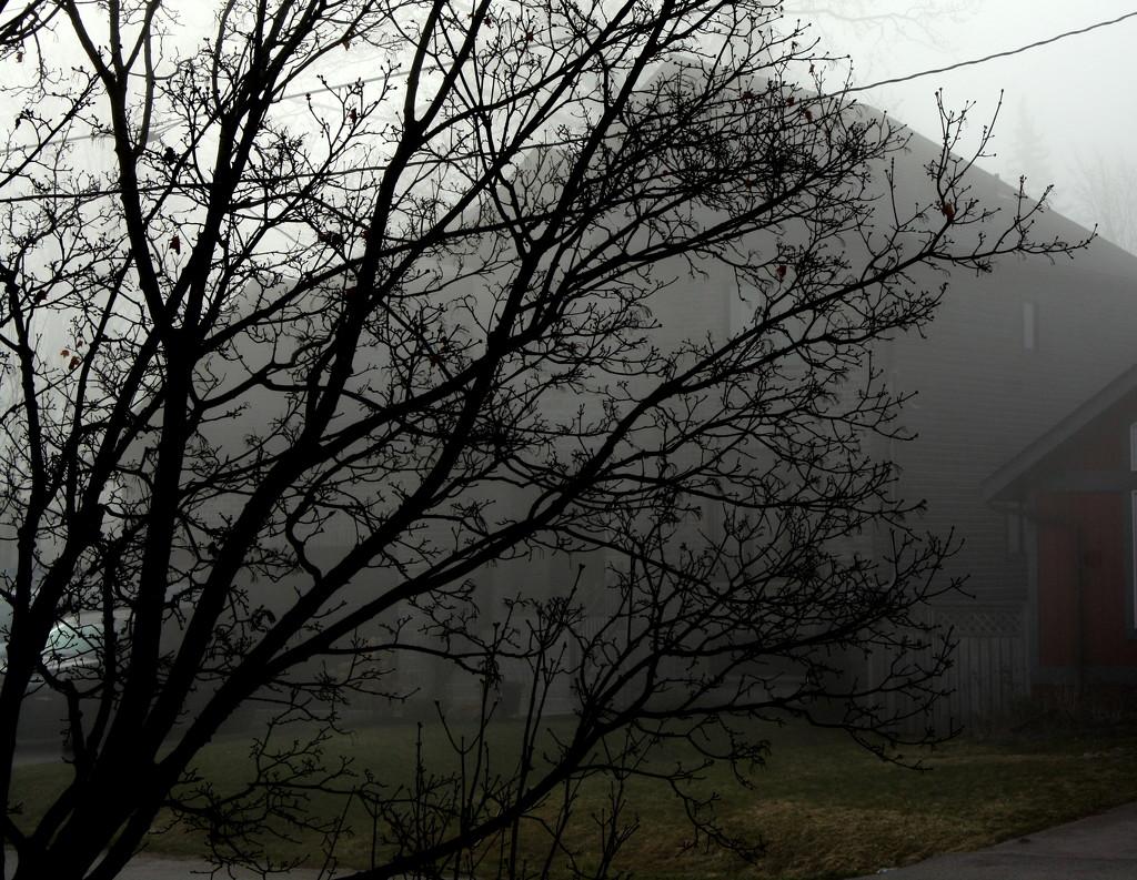 A foggy morning. by bruni
