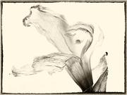 5th Apr 2021 - A daffodil
