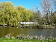 5th Apr 2021 - A walk in the park