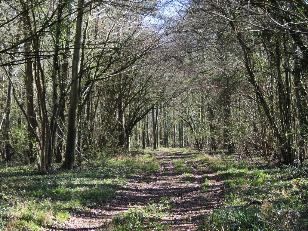 Woodland archway early spring by julienne1