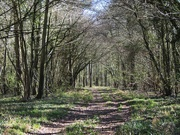 5th Apr 2021 - Woodland archway early spring