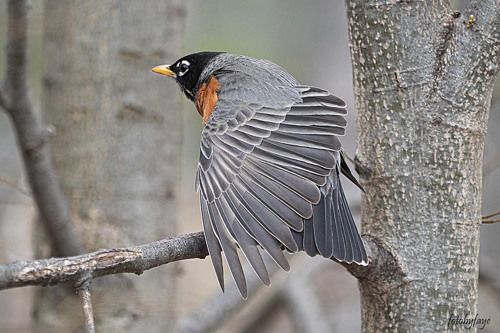 Spread your wing by fayefaye