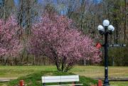 5th Apr 2021 - Springtime at the Park