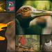 Aussie Birds by annied