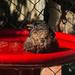 Splashing in the new red bath