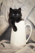 6th Apr 2021 - Little Cat