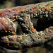 Rusty Barnacles by helenw2