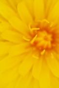 6th Apr 2021 - it's all a blur