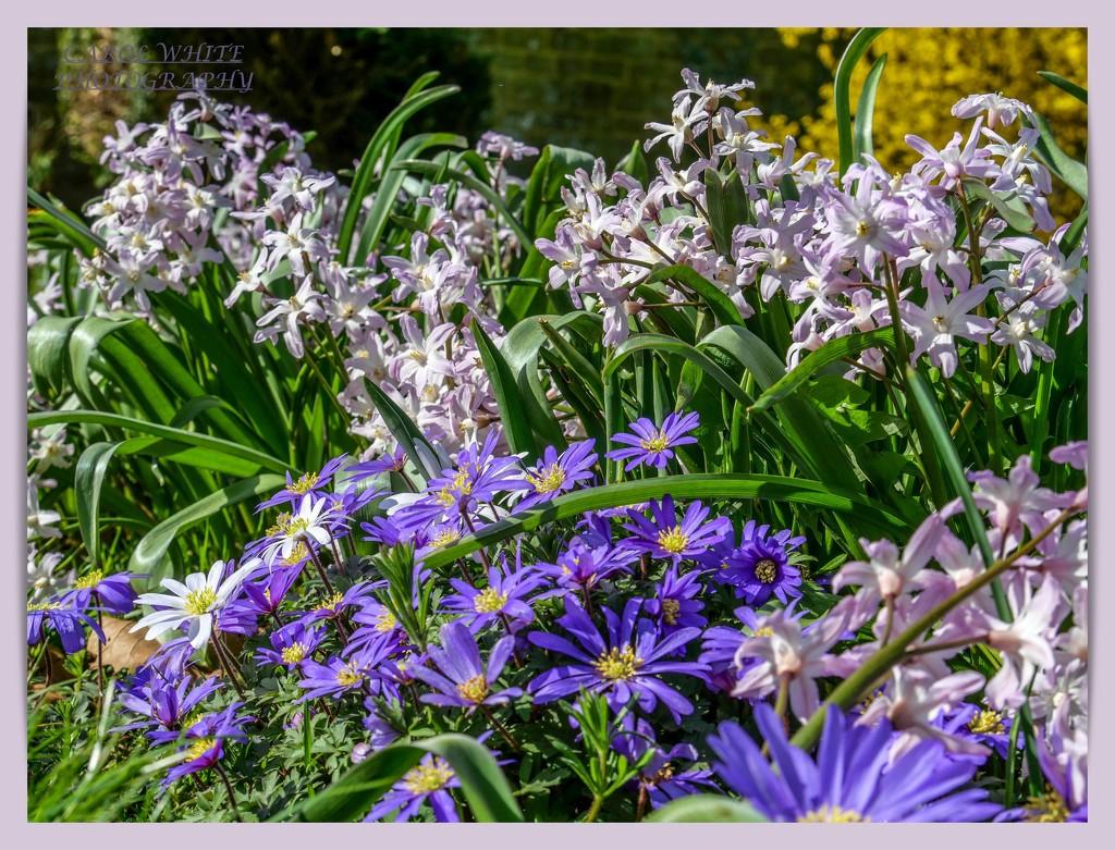 Floral Border,Canons Ashby Garden by carolmw