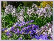 6th Apr 2021 - Floral Border,Canons Ashby Garden
