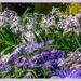 Floral Border,Canons Ashby Garden