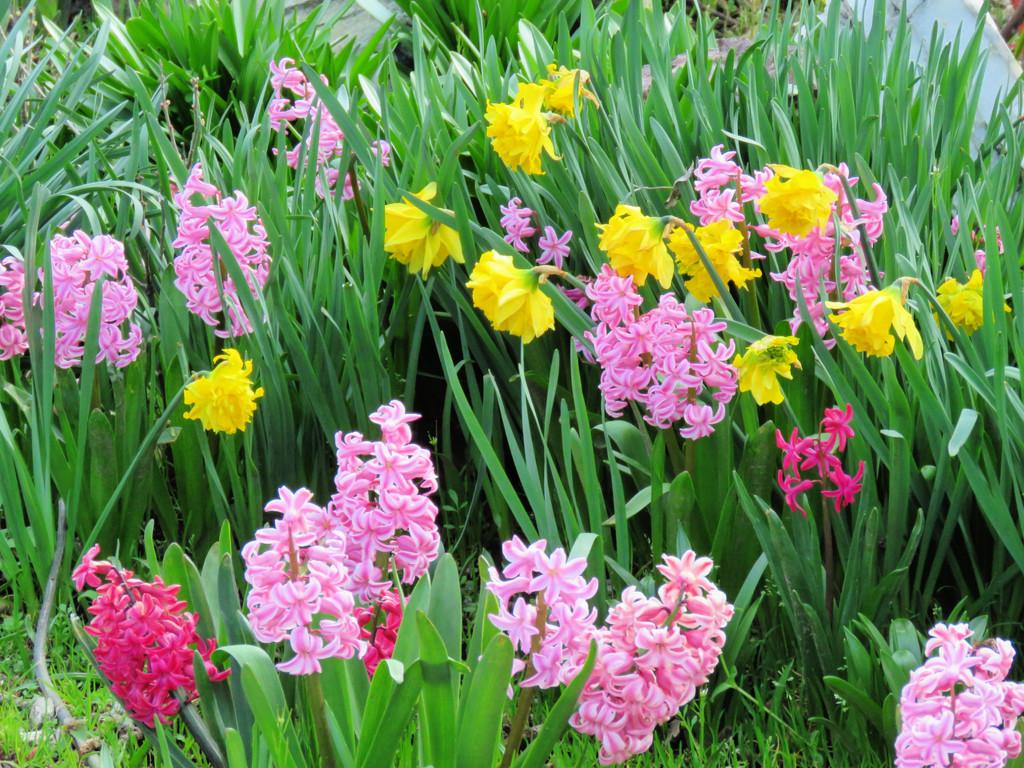 Spring Colors by seattlite