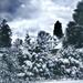 2021-04-06 april snow