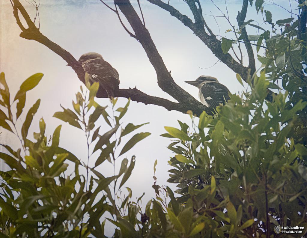 still raining by koalagardens