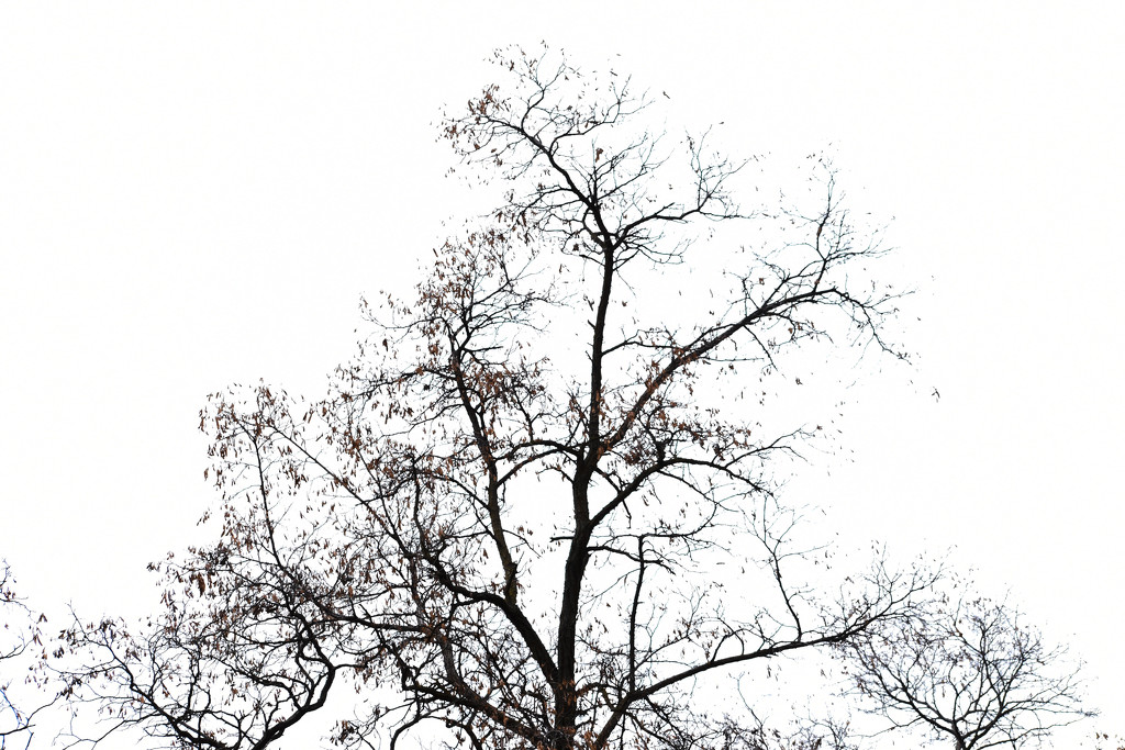 Tree Silhouette #2 by bjywamer