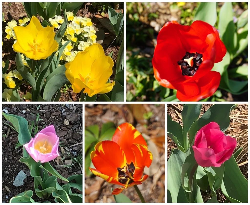 Springtime Favorites by allie912