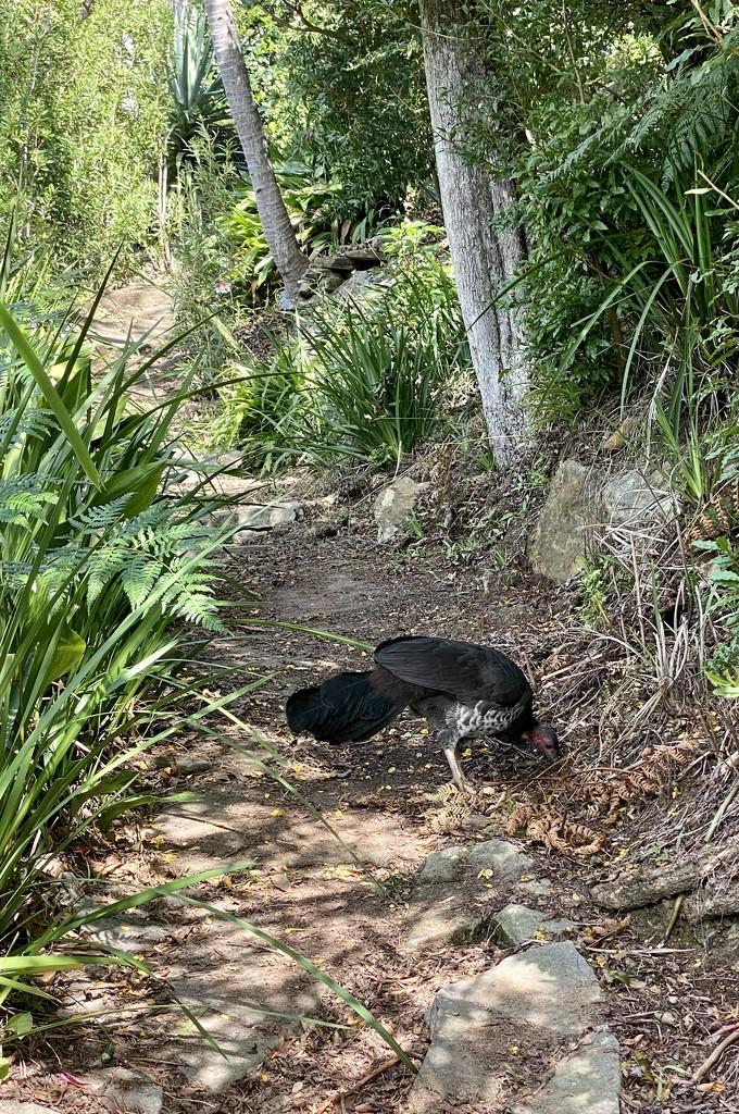 7 Days of Cremorne Point Loop Walk -3 by kjarn
