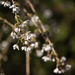Cheerful Cherry Blossoms