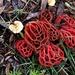 Funky fungi by sugarmuser