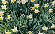 6th Apr 2021 - Flourish