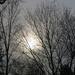 The Sun Peeks Through the Trees