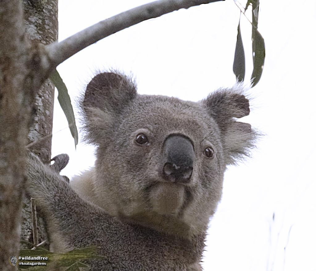 my boy Bullet by koalagardens