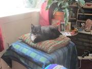 7th Apr 2021 - Arthur sitting on a favourite cushion.