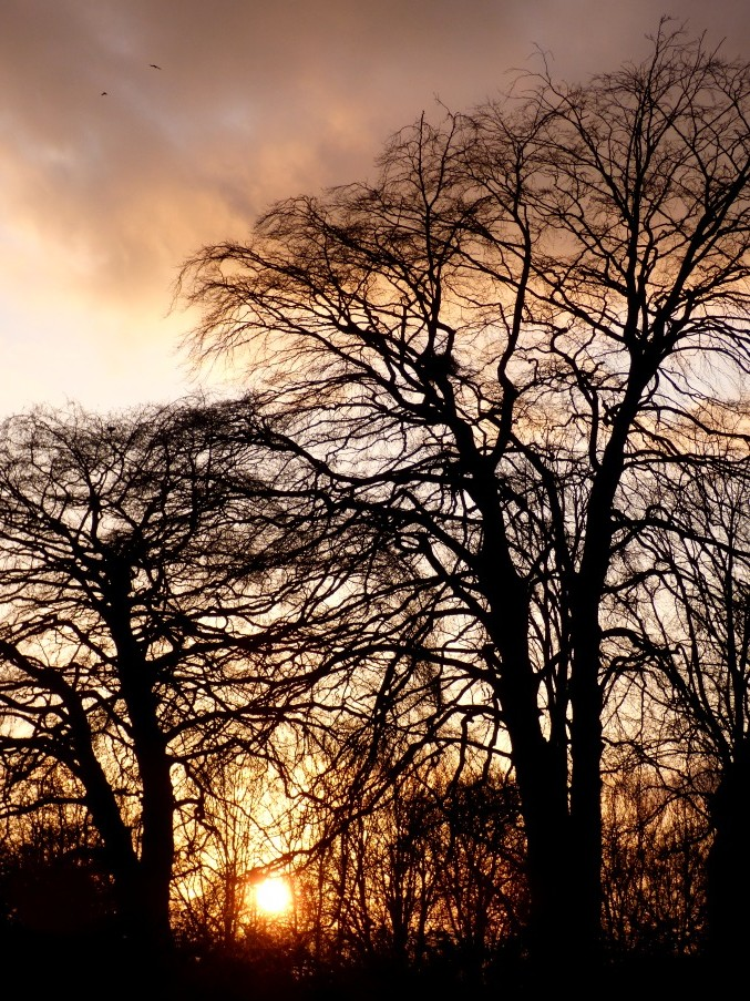 Trees at Sunset by fishers