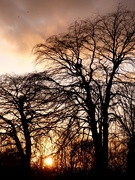 7th Apr 2021 - Trees at Sunset