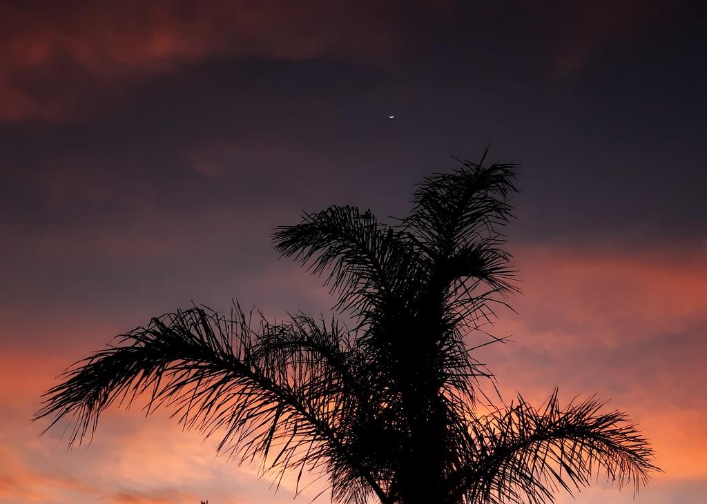 Crescent moon Sunrise  by salza