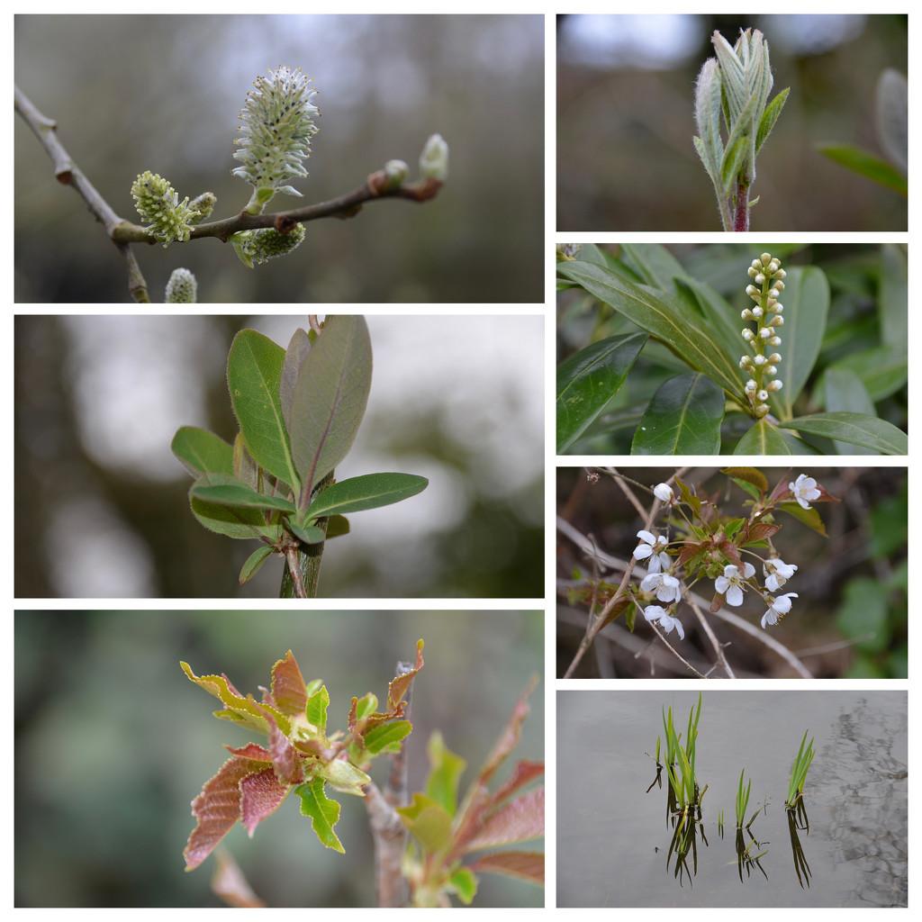 Spring is springing. by wakelys