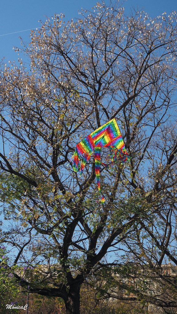 Kite on a tree by monicac