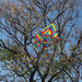 Kite on a tree