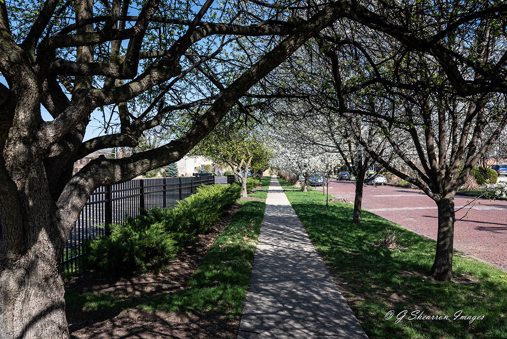 Leading Line to Spring Blooms by ggshearron